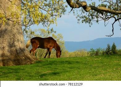 Hackney Horse, family farm, Webster County, West Virginia, USA