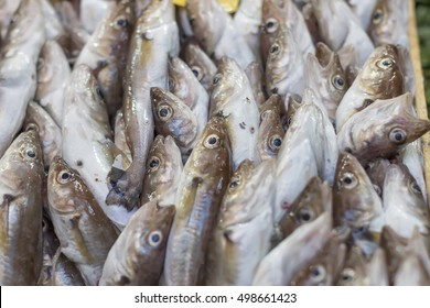 haddock in the fish market