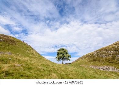 Hadrian Wall - Sycamore gap