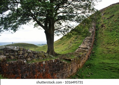 Hadrian's Wall Lone Tree