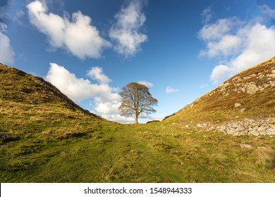 hadrians wall sycamore gap Northumberland