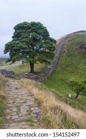 Hadrian's/Roman Wall. Northumberland. England. Sycamore Gap.