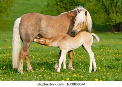 Pony Breeds: All Ponies - artbycrane.com