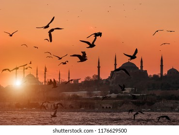 Hagia Sofia and Sultanahmet with seagulls during sunset in Istanbul Turkey