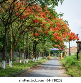 Hai Phong, Vietnam - May 21, 2016. Rural road with many flamboyant trees in Hai Phong, Vietnam. Haiphong is Vietnam third largest city and a major port near Hanoi.