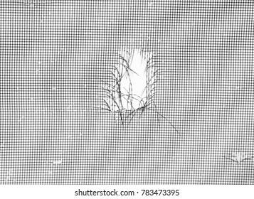 Hail Damage to Window Screen