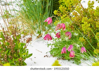 Hailstones in blooming flowers. The strong thunderstorms during warm weather in Summer. Hailstones on the grass after hailstorm.
