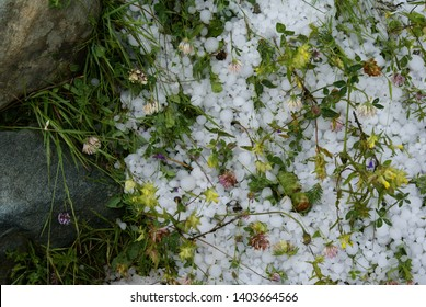 Hailstones in a field after a storm