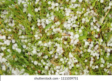 Hailstones that fell in the summer. White hailstones on green grass. Close-up. Background. Texture.