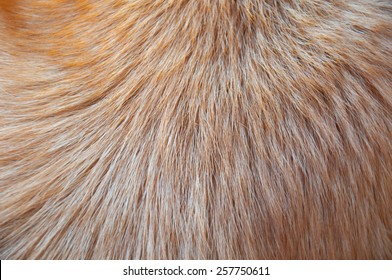 Hair animal color: It is hair of dog