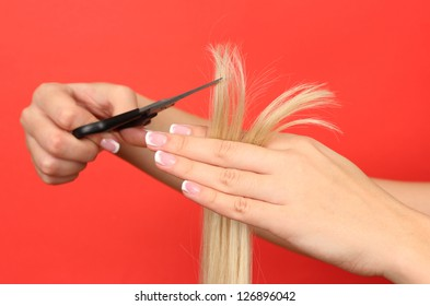Hair cutting, hair stylist at work with scissors
