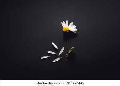 Hair loss Concept. Flower without petals on a dark background