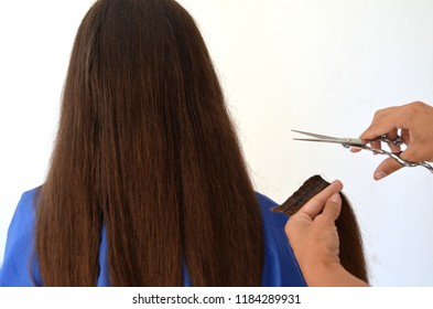 Haircut on really long hair, the Barber cuts off a lock of hair