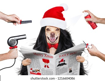 hairdresser dog ready to look beautiful by comb, scissors, dryer, and spray at the wellness spa salon,  at christmas with santa claus hat, reading newspaper