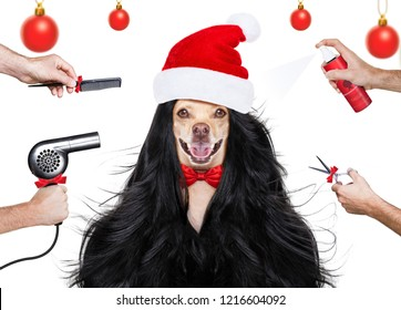 hairdresser dog ready to look beautiful by comb, scissors, dryer, and spray at the wellness spa salon, isolated on white background with very long hair at christmas with santa claus hat