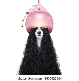hairdresser dog ready to look beautiful by comb, scissors, dryer, and spray at the wellness spa salon, isolated on white background with very long hair