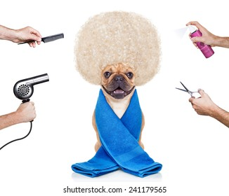 hairdresser dog ready to look beautiful at the wellness spa, isolated on white background