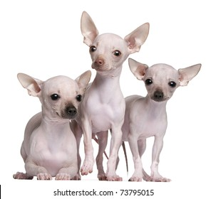 Hairlessdog Stock Images Royalty Free Images Vectors Shutterstock