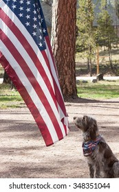 Hairy dog with red, white and blue scarf sits at attention in front of a fluttering American flag on Fourth of July.
