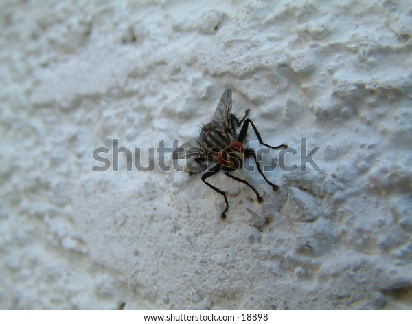 hairy fly on the facade