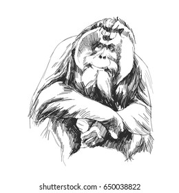 hairy orangutan in full growth sits on his haunches, graphics sketch quick drawing