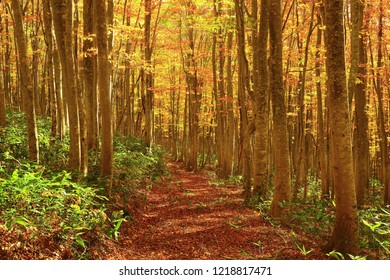 hakkoda, Aomori Prefecture, autumn leaves