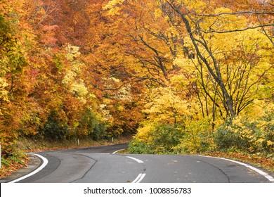 Hakkoda gold line at Aomori prefecture in autumn