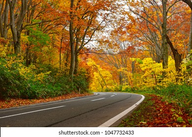 Hakkoda Gold Line road in autumn , Japan