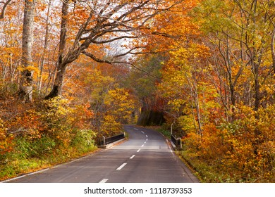 ( Hakkoda Towada Gold Line ) through a beautiful autumn forest on a rainy day with fallen leaves on the road in Towada Hachimantai National Park, Aomori Japan