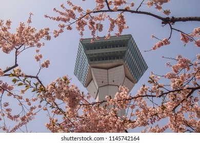 Hakodate,Hokkaido,Japan on April 29,2018:Springtime at Goryokaku Tower,with fully-bloomed cherry blossoms in the foreground.