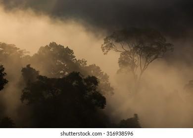Hala-bala narathiwas the morning light landscape view (Rainforest)
