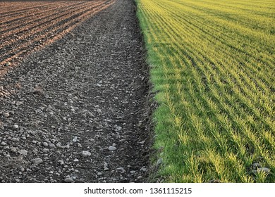 Half cultivated field and half uncultivated field, brown and green colors divide the photo in half
