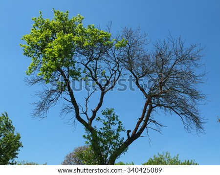 Half Dead Half Alive Tree Stock Photo Edit Now 340425089