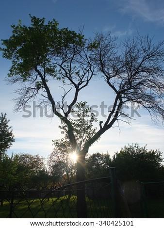 Half Dead Half Alive Tree Stock Photo Edit Now 340425101
