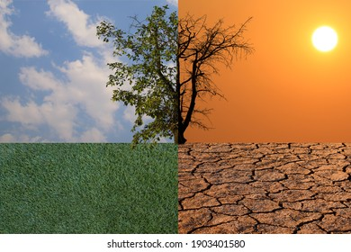 Half of dead tree under fantastic evening sunset is standing on cracked earth. Half of fresh tree under cloud is standing on fresh grass. Concept of Global warming. Save the environment.