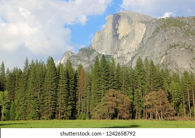 Half Dome over the forest - Yosemite National Park, California