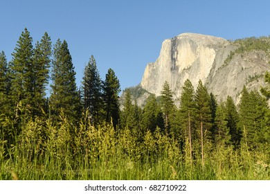 Half Dome in Yosemite National Park at dusk with field in foreground on a summer day
