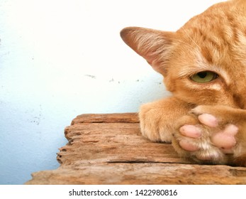 Half face of a brown cat with sharp eyes lying down on a wood and kept his palm in front of his face.