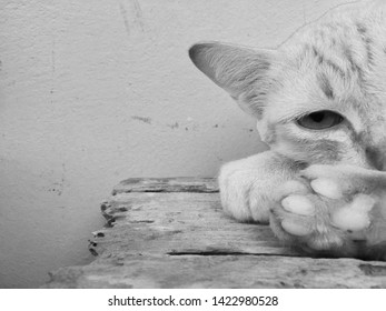 Half face cat in grey color with sharp eyes background.