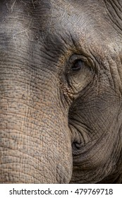 Half face of elephant