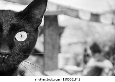 Half face portrait of a black cat, with a watchful look. In black and white. Unfocused background.