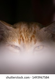 The Half Face of Yellow White Cat Hinding under Table