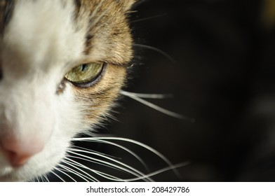 half headed cat with green eye on black background
