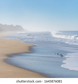 Half Moon Bay Beach, beautiful beach in California, sunrise on the Pacific coast, with willets birds on the shore