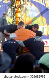 HALF MOON BAY, CA - OCTOBER 2015 - Pumpkin Festival workers load a giant pumpkin onto the scale at the 45th annual Pumpkin Weigh-Off contest in Half Moon Bay, California.