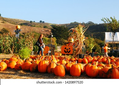 Half Moon Bay, CA, USA October 25, 2011 An adult woman searches for the perfect Halloween pumpkin in Half Moon Bay, California