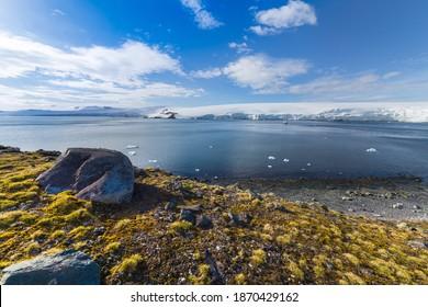 Half moon bay, South Shetland Islands harbor view with Deschampsia antarctica hair grass vascular plants - Shutterstock ID 1870429162