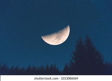 Half Moon with Milky way stars and tree silhouettes. My astronomy work.