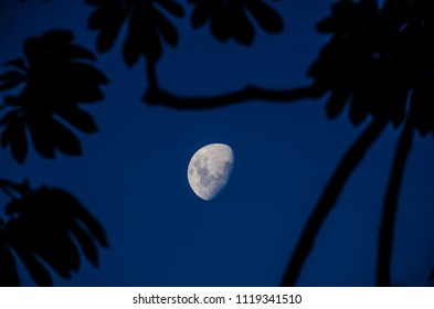 Half moon in Sao Jose do Barreiro, Brazil. On the blue sky we see the tree's surrounding the half moon.