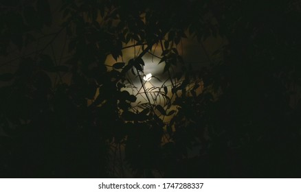 half moon spreading light behind tree branch in night